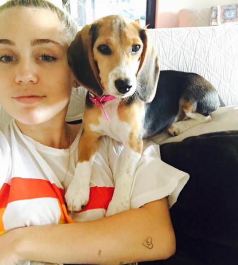 "Miley Cyrus with Barbie the Beagle / Source: <a href=""https://www.instagram.com/beaglefreedom/"" target=""_blank"">BFP Instagram</a>"