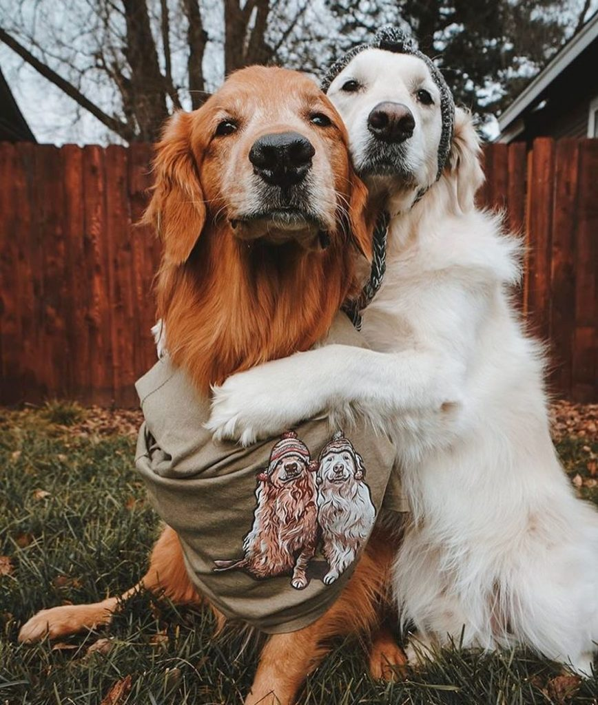 Animal portraits will be a popular t-shirt design trend in 2020